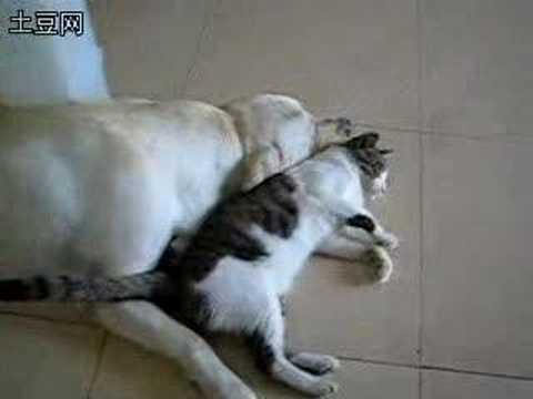 Cat love with dog (Re: Dog sex with cat)