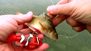 Robot RC ROBO FISH Nemo clown fish & dead bait vs LIVE PIKE. Underwater attack Weird ways of fishing
