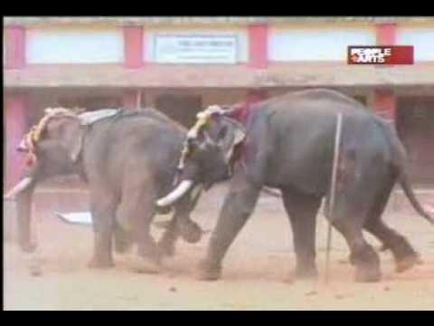 Elefante Loco