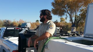Stocking the Colorado River with the endangered Bony Tail Fish - Full time van life