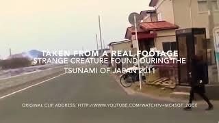 Tsunami visuals in Japan... A strange creature found