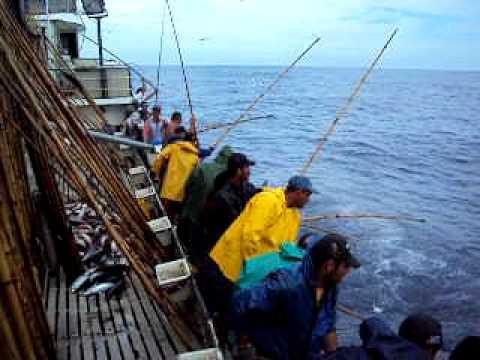 Pesca Atum Mestre Pedro p. 2