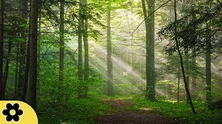 Healing Music, Relaxation Music, Chakra, Relaxing Music for Stress Relief, ✿3218C