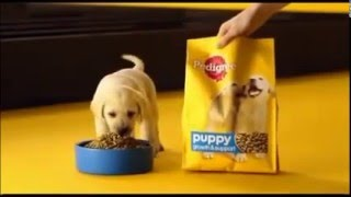 Pedigree Ad without sound