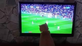 Maç izleyen kedi ⚽⚽