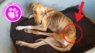 This Dog Was Dying But Her Rescuers Refused To Give Up On Her