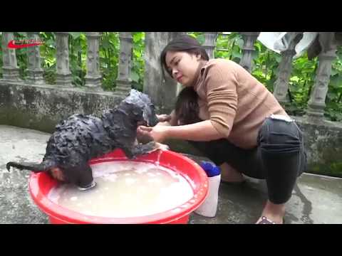 Xxx Mp4 Lovely Amazing Girl Playing With Groups Of Baby Cute Dog Funny Cute Dog Part 8 3gp Sex