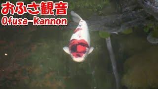 【Nara】おふさ観音 Ofusa-kannon Temple