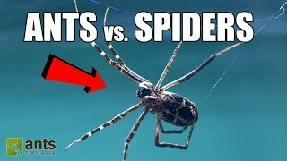 FIRE ANTS vs. GIANT SPIDERS!