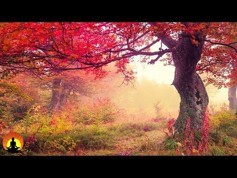 3 Hour Healing Meditation Relaxing Music Soothing Music Calming Music Relaxation Music ☯2201