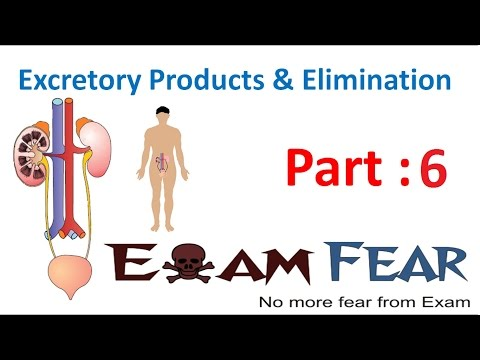 Biology Excretory Products & Elimination part 6 (Structure of Kidney) CBSE class 11 XI