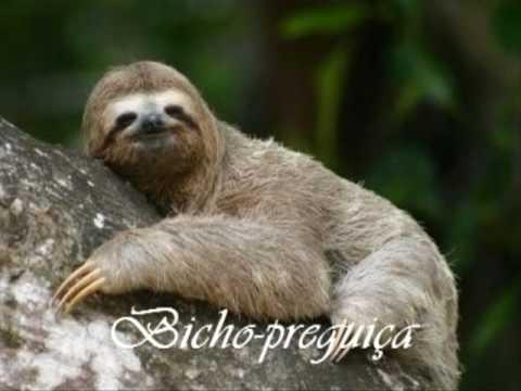 Animais do Pantanal