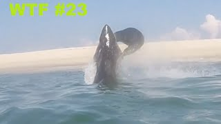 Great White Shark vs Seal - WTF #23