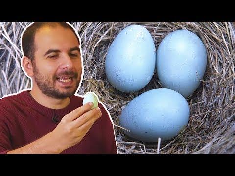 Xxx Mp4 Mavi Yumurtayı Test Ettik Tadı Nasıl 3gp Sex