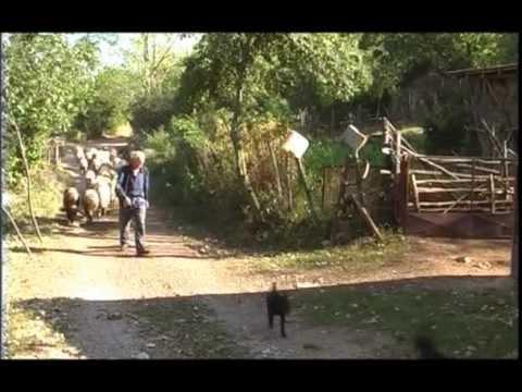 Uzgoj ovaca u selu Bancarevo U nasem ataru 405.wmv