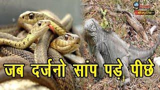 पीछे पड़े दर्जनों सांप, 3 बार चंगुल में फंसा, रोंगटे खड़े हो जांएंगे…! | Snake Iguana Viral Video