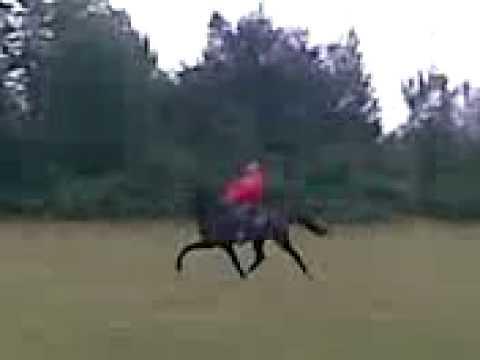 Xxx Mp4 Speed Horse Nayat Altuntas 3gp 3gp Sex