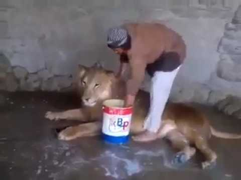 YOK ARTIK Aslan yıkayan adam