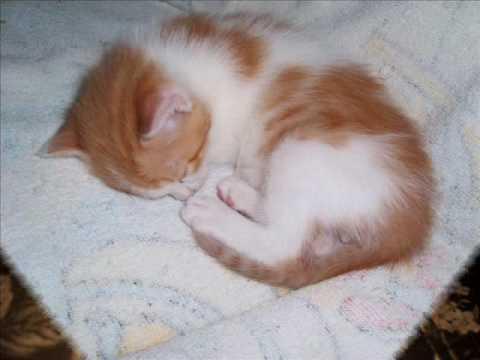 Crecimiento de mi gatito.wmv