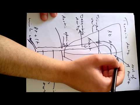 Xxx Mp4 Anatomy Of The Heart Dr Omar Al Ghrairy 3gp Sex