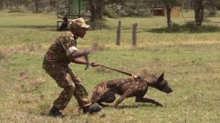DANGER: Rapid Response Dog Unit In Kenya | This Wild Life | BBC Earth