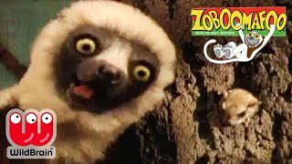 Zoboomafoo | Full Episode: Tiny Hide And Seek | Animals For Kids