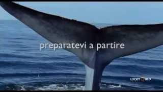 Profondo Blu - BBC - Trailer Documentario