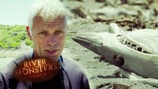 Shark Graveyard - River Monsters