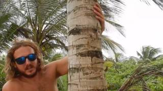 How to Climb a Coconut Tree (with Instructions)
