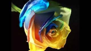 Ma passion les roses 2