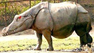 12 حيوانا يعود ظهورها لعمليات تزاوج استثنائية !!