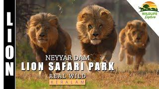 BUS CHASING LIONS-NEYYAR-KERALA-Trivandrum- INDIA