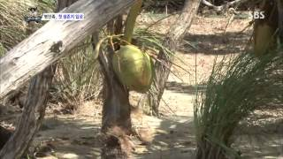 The law of the Jungle(정글의법칙) Ep.72 #3(1)
