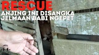 RESCUE: Anjing Ini Disangka Jelmaan Babi Ngepet