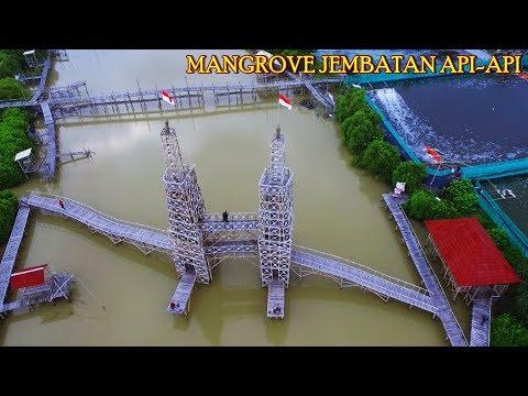 Xxx Mp4 Keren Mangrove Jembatan Api Api MJAA Temon Kulon Progo Yogyakarta Vlog Ngapak Kebumen 3gp Sex