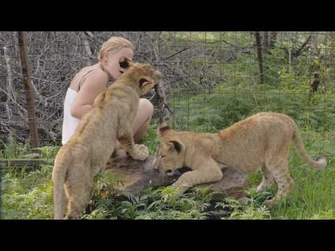 Living with big cats South Africa Long cut