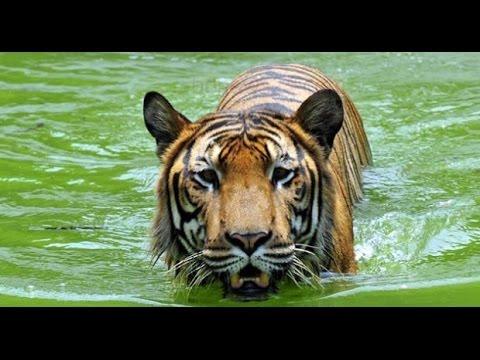 Rajshahi Zoo- Bangladesh Beautiful Video