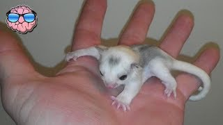 Top 10 STRANGE ANIMALS You Can Own As PETS!
