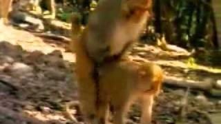 سكس حيوانات ـ 2009   YouTube