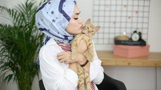 Kedimi Sahiplenme Hikayem,Youtube