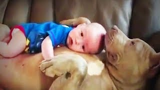 Baby and Pets 😍 Cute Babies With Their Pets Playing (Part 2) [Funny Pets]
