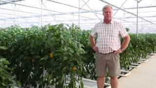 Success with Netafim Greenhouse on a pepper farm