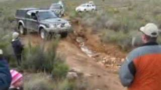Colt going through natural obstacle