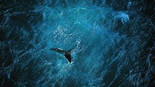 Planète Océan [FR] Yann Arthus-Bertrand & Michael Pitiot - le film Full HD