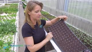 Using Plug Trays To Grow Seedlings
