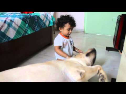 Cute baby and adorable Dog [ iShaan and Austin ] Desi Bong India / Indian  video