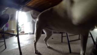 Buckus Cam Dog GoPro