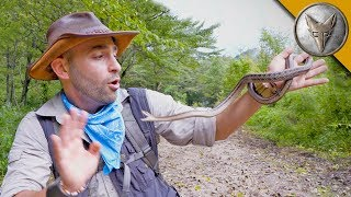Snake LUNGES at My Face!