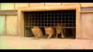 Cristãos sendo devorados por leões no Coliseu