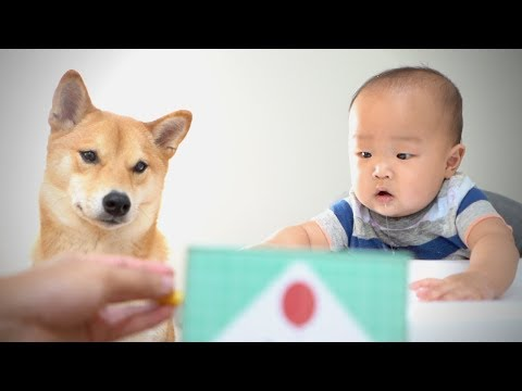 Xxx Mp4 Baby And Dog React To JACK IN THE BOX Ep 2 3gp Sex